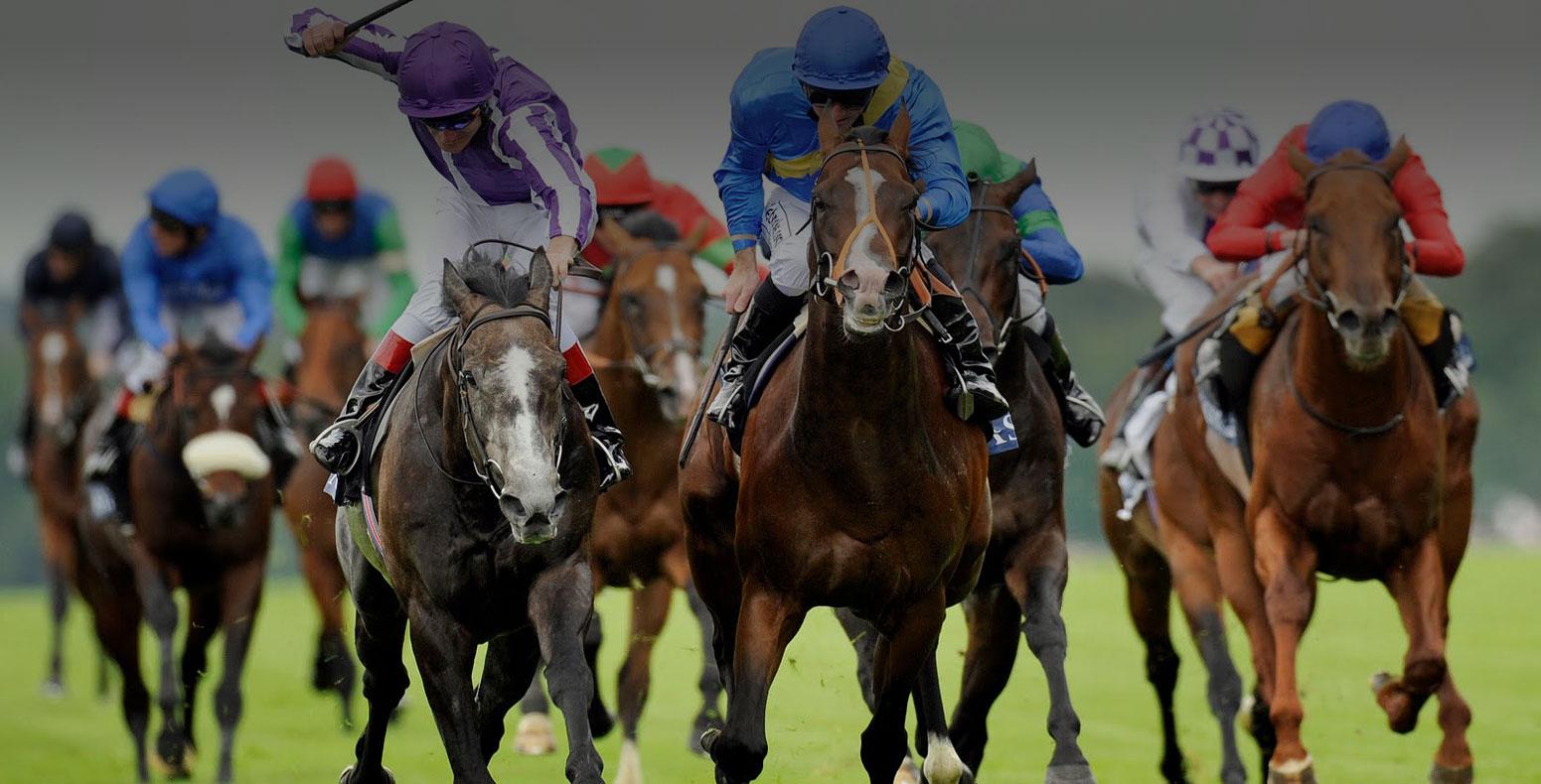Horse racing in Killarney